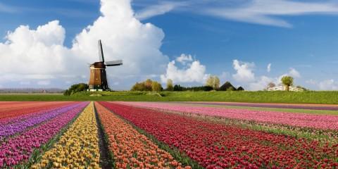 landschap-holland-tulpen